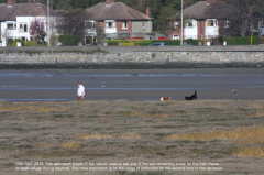 Dogs on mudflats